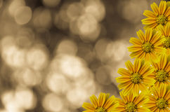 Little Yellow Star Stock Photography