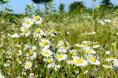 Little yellow and white flowers in field Stock Photos