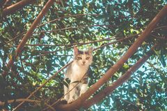 Little young cat climbing on tree stock photos