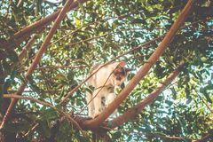 Little young cat climbing on tree royalty free stock image