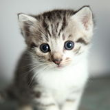 Little young cat portrait Royalty Free Stock Photo