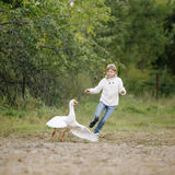 Little young girl in a white sweater and jeans running after goose on farm. Lifestyle portrait Royalty Free Stock Photo