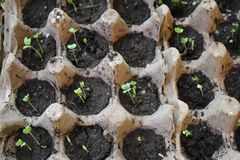 Little young, green and little seedlings of plants. royalty free stock photos