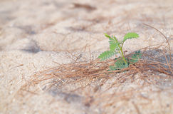 Little young plant Royalty Free Stock Photo