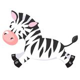Little Zebra Stock Image