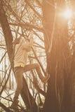 Littlegirl im Baum, der auf Niederlassung steht Stockbilder