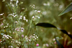 Littles blommor Arkivfoto