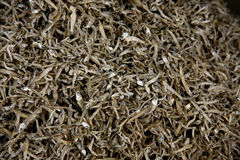 Littlt Dried Salted Fish. Are pile on Tray ,show eye and tin body Stock Photo