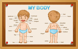 Littly Boy And Body Parts Stock Photo