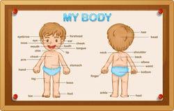 Littly pojke och kroppsdelar royaltyfri illustrationer