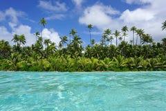 Littoral avec de l'eau les arbres de noix de coco et de turquoise Image stock