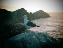 Littoral de Big Sur Image libre de droits