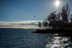 Littoral de nord-ouest Pacifique Photo libre de droits