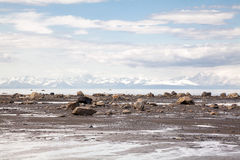 Littoral de plage rocheuse Photos stock