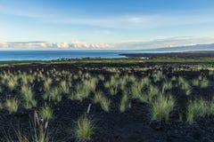 Littoral hawaïen, grande île Touffes d'herbe dans la roche de lave dans le premier plan L'océan pacifique, Mauna Kea dans la dist images libres de droits