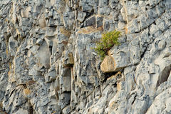 Littoral rock, close up. Bush on the littoral rock. Close up. Northern Caucasia Royalty Free Stock Photos