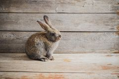 Little rabbit on wooden background royalty free stock image