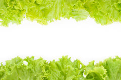 Littuce on white background Royalty Free Stock Photos