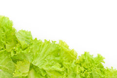 Littuce on white background Stock Photo