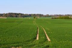 Litwinu krajobraz Zdjęcia Stock