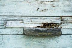 Liv av bin, ingång till bikupan Royaltyfri Fotografi