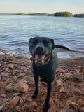 Liv av en hund royaltyfri foto