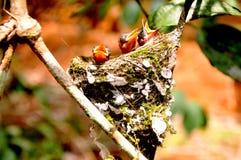 Liv av fåglar Royaltyfria Foton