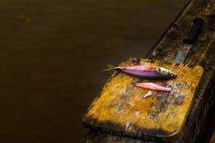 Liv av fisken Arkivbild