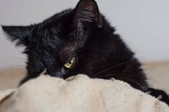 Liv av katter och folk hemma arkivfoton