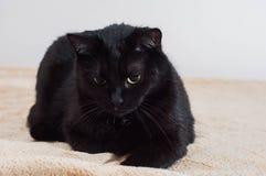 Liv av katter och folk i den moderna v?rlden arkivfoton