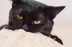 Liv av katter och folk arkivfoton