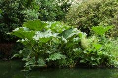 Liv för tropisk växt fotografering för bildbyråer