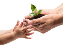 Liv i dina händer - plantera whitvitbakgrund arkivbild