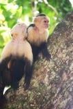 Liv i träden Fotografering för Bildbyråer