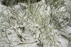 Liv i vinter Royaltyfria Foton