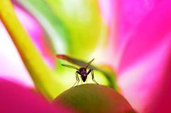 Liv inom blomman Arkivbild
