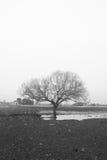 Liv och död Fotografering för Bildbyråer
