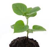Liv- och tillväxtbegrepp med en grön liten växt Royaltyfri Foto