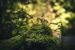 Liv på skoggolvet Royaltyfri Bild