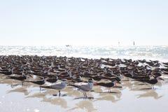 Liv på stranden Arkivfoton