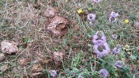 Liv växer från gödningsmedel - blommor Royaltyfri Fotografi