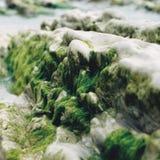 Liv växer på det slitna havet vaggar Arkivbild