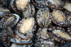 Live Abalones. Close-up shot of Live Abalones on Sale at a Seafood Market Stock Photos