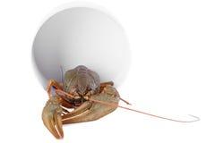 Live animal crawfish Stock Image
