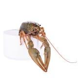 Live animal crawfish Stock Photo