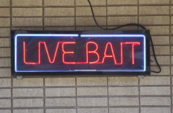 Live Bait Royalty Free Stock Image