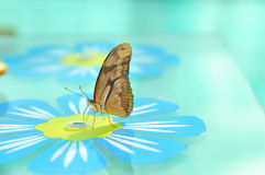 Live Butterfly Royalty Free Stock Images