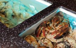 Live cancer in the aquarium Stock Images