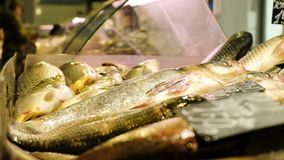 Live carp lie on the counter of the store and breathe gills.  stock footage