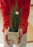 Live Christmas träd Arkivbild